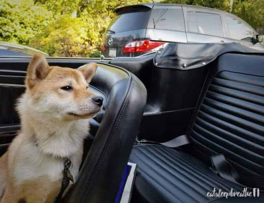 mika in the mustang